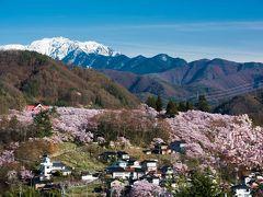 満開の「天下第一の桜」高遠城址は凄かった!そして桜散る「上田城千本桜」は…