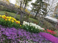 西宮・・・・芦屋にて   <春を彩るお花たち>