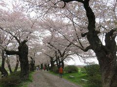 2016春、奥羽の桜巡り(1/38):4月22日(1):北上展勝地(1):新幹線で、東京駅経由、北上駅へ、古木の染井吉野