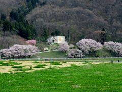 2016春、奥羽の桜巡り(4/38):4月22日(4):北上展勝地(4):北上川、古木の染井吉野、八重紅枝垂桜