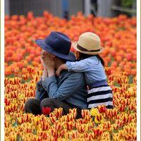 Solitary Journey [1754] 感動の花風景がありました!75万本のチューリップが満開♪<虹の畑・初恋の丘/世羅高原農場>広島県世羅町