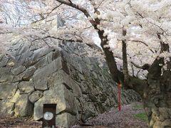 2016春、奥羽の桜巡り(5/38):4月22日(5):盛岡城址公園(1):盛岡城址、染井吉野