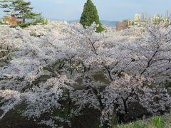 2016春、奥羽の桜巡り(6/38):4月22日(6):盛岡城址公園(2):盛岡城址、染井吉野