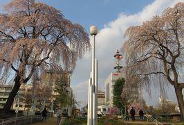 2016春、奥羽の桜巡り(8/38):4月22日(8):盛岡城址公園(4):盛岡城址、染井吉野