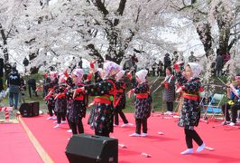 2016春、奥羽の桜巡り(16/38):4月23日(7):仙北市(7):角館、枝垂桜、八重紅枝垂桜、染井吉野、紫木蓮、手踊り