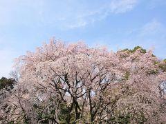 母娘でのんびり東京散歩 ~しだれ桜満開の六義園~