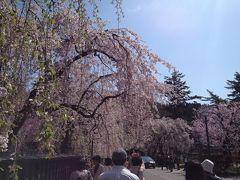 『東北桜紀行と北海道新幹線乗車の旅』(その三)