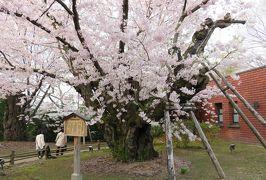 2016春、奥羽の桜巡り(20/38):4月23日(11):弘前市(1):秋田市から、青森の弘前市へ、弘前公園、満開の染井吉野