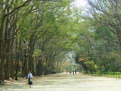 桜には早かった奈良(京都) 4 京都の桜満開はこの後?