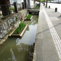 道の両脇に鯉が泳いでる殿町通り、風格のある道を町歩き/島根・津和野