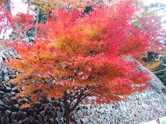 高尾山の紅葉 2007/11/30