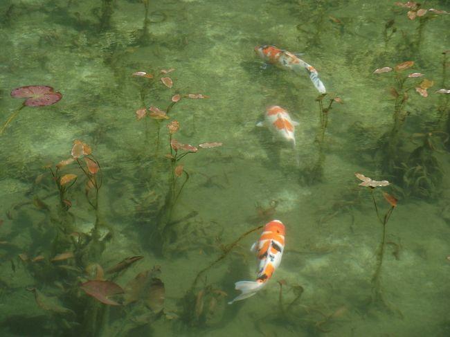 話題の池ですが、日本の真ん中の不便なところにあります。でもそんな場所でも自分もそうですが、外国の方もツアーの方も来ます。モネの池は睡蓮のさく夏がいいのかもしれませんが、天候や混雑も考えると思い立った時にいくのがいいのかもしれません。