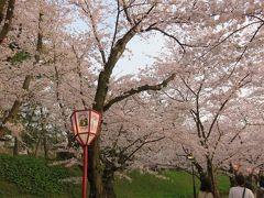 2016春、奥羽の桜巡り(26/38):4月23日(17):弘前市(7):弘前公園、移動中の天守閣、満開の染井吉野と枝垂桜