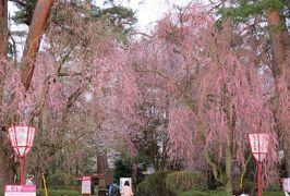 2016春、奥羽の桜巡り(27/38):4月23日(18):弘前市(8):弘前公園、移動中の天守閣、満開の染井吉野と枝垂桜