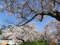 2016春、奥羽の桜巡り(29/38):4月24日(1):青森市(1):青森で泊まったホテル、芦野公園へ、ほぼ満開の染井吉野