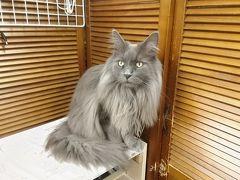 GW☆初めての猫カフェ体験と藤城清治 光のメルヘン展