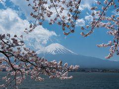 桜と富士山を撮り歩く (2) 河口湖の桜、精進湖の月夜の富士、田貫湖のダイヤモンド富士