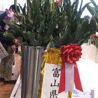 また来ちゃった富山!〜(4)となみチューリップフェアの観賞を続けております!