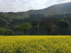 菜の花咲く野沢温泉と北竜湖&新緑の清津峡