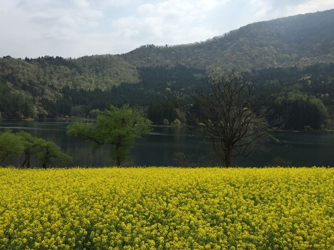 GWに主人と野沢温泉1泊旅行に行ってきました。<br />一人旅のときは公共交通機関利用ですが、今回はマイカー利用なので寄り道も便利。<br />菜の花が咲く北竜湖と、日本三大渓谷のひとつ、清津峡に寄りました。<br />GWなので帰りの高速は混んだけど、北竜湖や清津峡はあまり混んでいなかったので、穴場だったのかも。