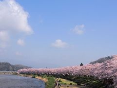 角館桜・刺巻湿原ミズバショウ・西木かたくりの日帰り旅