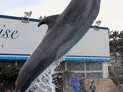鴨川シーワールド1/8  シャチ・イルカが主役 ☆総合海洋レジャーセンターとして