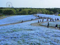 茨城・ひたちなか「ひたち海浜公園」
