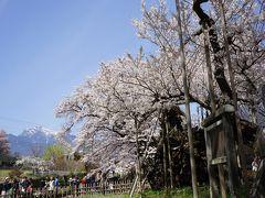 2016.4 満開の桜を訪ねて(1)~山高神代桜