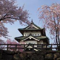 桜追いかけて津軽~三内丸山遺跡と弘前さくらまつり~①