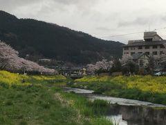 ★桜の咲く川縁を散歩できた湯布院温泉