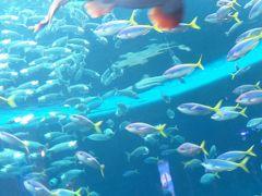 鴨川シーワールド6/8 トロピカルアイランド 南太平洋 ☆大水槽〔無限の海〕も