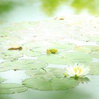 クロード・モネの世界へ~~睡蓮の咲く池、北川村「モネの庭」マルモッタン~~