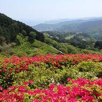 十国峠 新緑とつつじが美しい姫の沢公園 & 來宮神社でパワーをいただく!―GW熱海旅・1日目