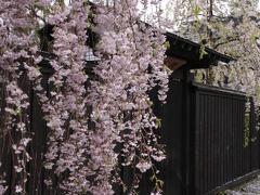 北東北の桜を訪ねて 3泊4日の旅 5−1 角館編