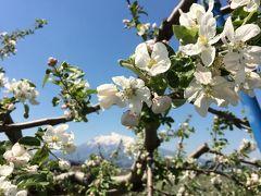 弘前りんご花まつり2016