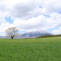北東北の桜を訪ねて 3泊4日の旅 5−4 小岩井農場 編