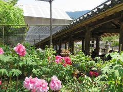 2016春、奈良のお寺の花巡り(7/17):4月30日(7):長谷寺(1):長岳寺から長谷寺へ、屋根が付いた石段、・登廊、下登廊、牡丹園