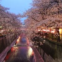 東急トライアングル桜巡り2016年4月