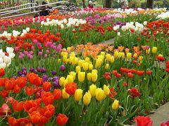 優雅な春の横浜を楽しむ旅♪ Vol8 ☆横浜公園「スプリングフェア2016」:見事なチューリップ♪