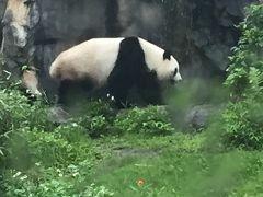 花蓮から変更・・・子連れで台湾動物園と変身写真を撮りに行こう Vol.3