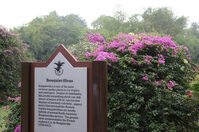今年で8回目のF1シンガポールグランプリ。<br />グランプリでの詳細は曜日ごとをご覧ください。<br />金曜日<br />土曜日<br />日曜日<br />今回は土曜日に訪れたシンガポール植物園やシンガポールからバンコクへの向かった機内の様子などをご紹介します。<br />シンガポール植物園は長年シンガポールに訪れている中で1度も行ったことがありませんでした。地下鉄も通ったので行きやすいですから1度は訪れてみてください。<br /><br />AIR<br />1.9/17 NH801 成田(18:05)--シンガポール(00:15+1)<br />2.9/21 3K515 シンガポール(10:45)--バンコク(12:10)<br />3.9/23 ET618 バンコク(14:25)--クアラルンプール(17:40)<br />4.9/24 NH816 クアラルンプール(07:00)--成田(15:00)<br />HOTEL<br />SINGAPORE Hotel 81 Premier Star(9/17)<br />SINGAPORE Holiday inn Singapore city center(9/18-9/20)<br />PATTAYA Ozo Pattaya Hotel(9/21)<br />BANGKOK FuramaXclusive Asoke Hotel Bangkok(9/22)<br />KUALA LUMPUR Hilton Kuala Lumpur(9/23)