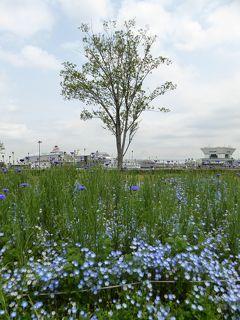 優雅な春の横浜を楽しむ旅♪ Vol13 ☆山下公園からみなとみらいへ散歩♪