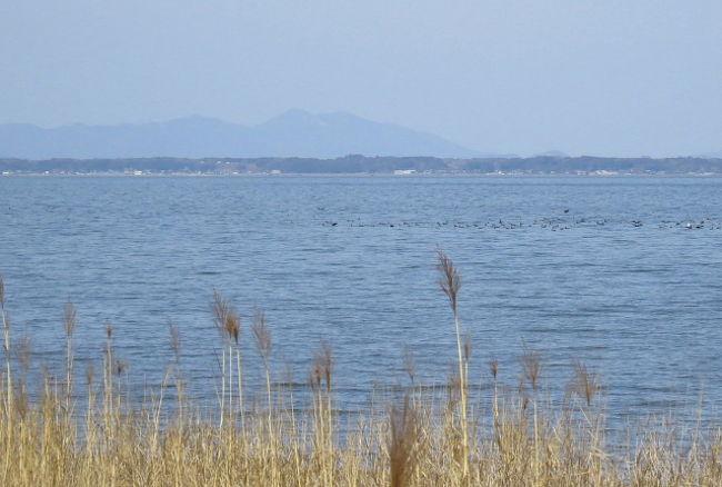 稲敷市の霞ヶ浦湖面で、ホオジロガモの群れが見られるとの情報を戴き、見に行ってきました。<br /><br />表紙写真は、稲敷市の霞ヶ浦湖岸から見た霞ヶ浦と筑波山です。<br /><br />(写真が多くなった為に、2冊に分割しました。)