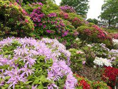 優雅な春の「根津神社 つつじまつり」♪ Vol1 豪華絢爛なつつじ♪