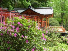 優雅な春の「根津神社 つつじまつり」♪ Vol2 江戸時代の美しい神社♪