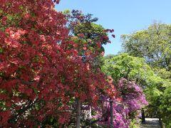 新緑の川越 優雅な散歩♪ Vol1 ☆中院:ツツジと新緑の美しい庭園♪