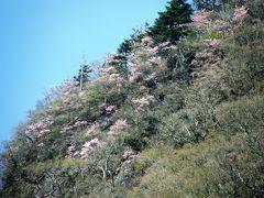 新緑とヤシオツツジやレンゲツツジを求めて赤城山の主峰黒檜山から赤城駒ケ岳を歩く