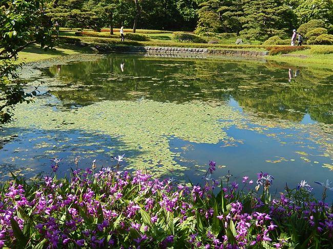 5月12日、午後2時半前に皇居・東御苑に入って初夏に咲くバラ等の花を見ることにした。 東御苑には四季折々訪問しているがこの時期には訪問したことがなくあまり期待せずに入った。 花としてはパラについては見る価値があり、素晴らしかったがその他については前回の訪問(http://4travel.jp/travelogue/11125326)に比べて寂しかった。 ただし、新緑の風景が前回よりも美しく二の丸庭園ではヒメコウホネの花が咲き素晴らしく感じた。<br /><br />旅行記としては①大手門~二の丸庭園~汐見坂<br />②本丸~バラ園~野草の島~大手門迄の二部に分けてまとめる。<br /><br />*写真は二の丸庭園の風景