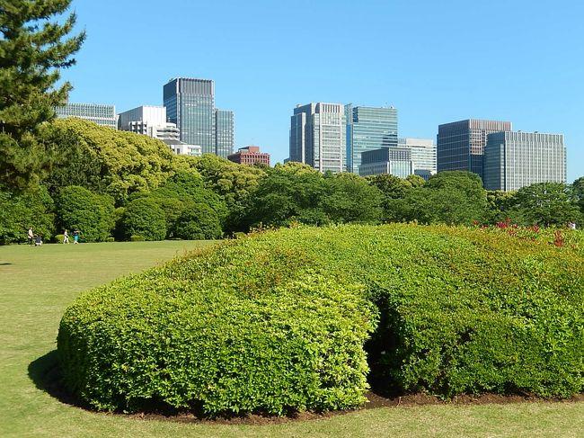 5月12日、午後2時半前に東御苑に入り、五月晴れの下の美しい二の丸庭園を見た後、汐見坂を上って本丸へ進んだ。 本丸には美しい芝生が広がっており、紫外線も強いために芝生にある木陰で涼んでいる人も見られた。 当方は日影が多い、竹の島、バラ園、野草の島等を歩いた。 バラ園ではこの時期が最も見ごろでハマナス等が美しかった。<br /><br /><br /><br />*写真は本丸芝生園