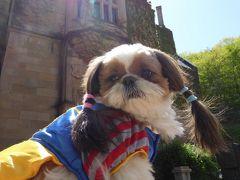 春の北軽井沢バカンス♪ Vol4 ☆高山村 「ロックハート城」 愛犬と一緒に遊ぶ♪